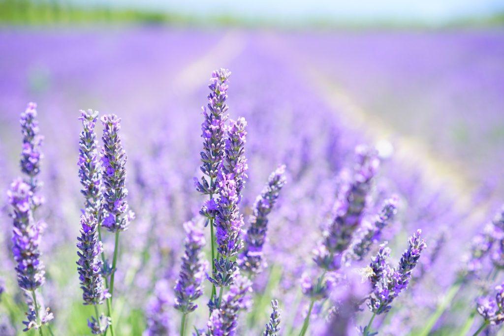 lavender blossom 1595581 1920